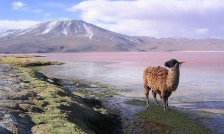 España, principal proveedor de Aceite de Oliva a Bolivia