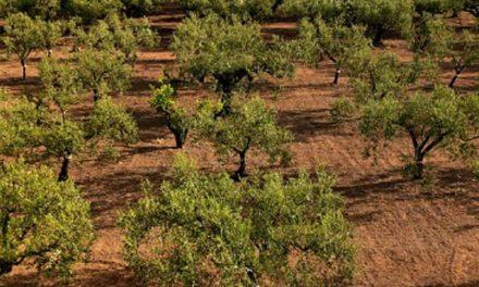 Reto en Europa: el uso de fertilizantes y la emisión de amoníaco