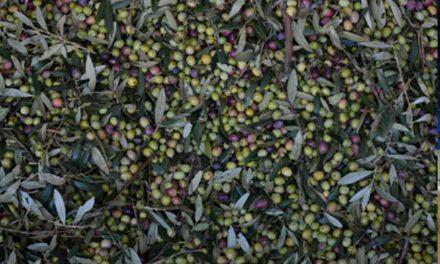 Cambio en el Código Alimentario Argentino – Sección Aceitunas